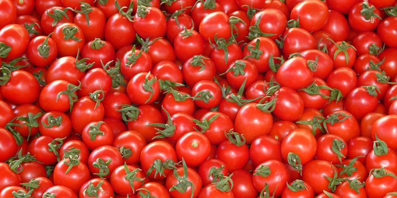 Pomodori, che passione!