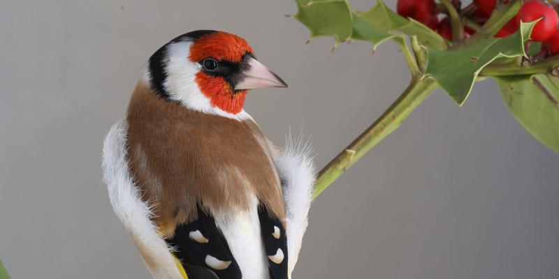 A Foggia Weekend Ornitologico Internazionale